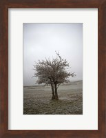 Framed Cedar Tree