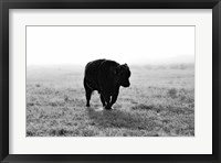 Framed Bull After Ice Storm
