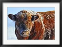 Framed Bull on Ice