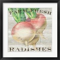 Framed Farm Fresh Radishes