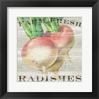 Farm Fresh Radishes Framed Print