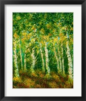 Framed Birch Trees