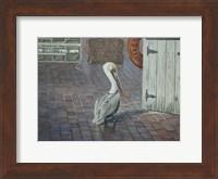 Framed Petes' Pelican