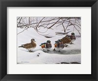 Framed Winter Wood Ducks