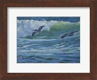 Framed Pelican Skimmers
