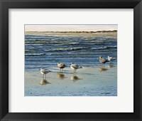 Framed Cape May Herring Gulls