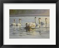 Framed Hanover Swans Six