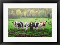 Framed Curious Cows