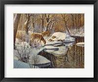 Framed Quinnipiac River White Tails