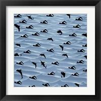 Framed Fishtales 41