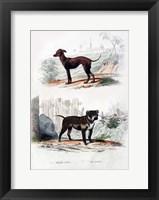 Framed Pair of Dogs II