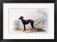 Framed Dog III