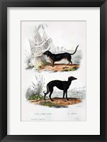 Framed Pair of Dogs III