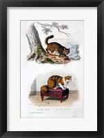 Framed Wild Cat and Angora Cat