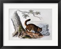 Framed Wild Cat