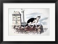 Framed Cat on Roof Top