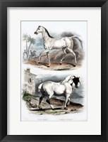 Framed Pair of Horses