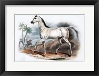 Framed Horse I
