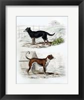 Framed Pair of Dogs IV