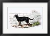 Framed Dog VII