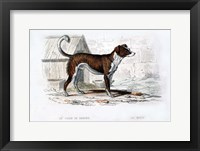 Framed Dog VIII