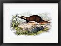 Framed Badger