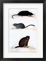 Framed La Taupe, Le Muscardin, La Marmotte