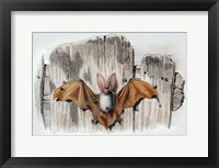 Framed Bat II