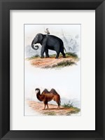 Framed Elephant and Camel