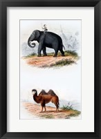 Framed Elephant and Camel