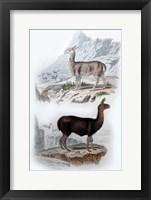 Framed Vicuna and Llama