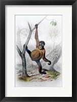 Framed Orangutan