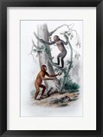Framed Pair of Monkeys II