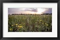 Framed Flowers in the sunset