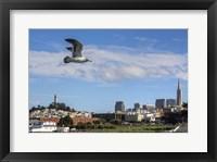Framed Over SF