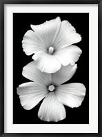 Framed Perfect White