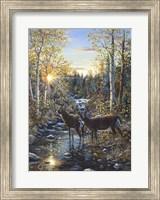 Framed Whitetail Deer
