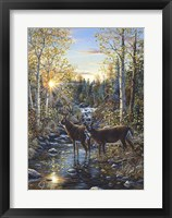Framed Whitetail Deer