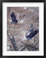 Framed Nesting Time - Great Blue Herons