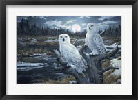 Framed Snowy Owls