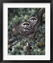 Framed Racoons