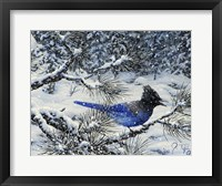Framed Winter Jay
