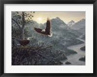 Framed Eagles Nest