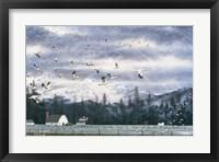 Framed Geese Flying Over Farmland