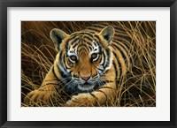Framed Tiger Cub