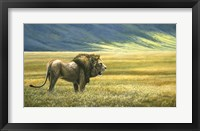 Framed His Domain Lion
