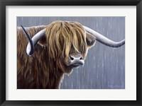 Framed Highland Bull Rainy Day