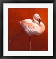 Framed Flame Bird Flamingo