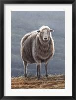 Framed Herdwick Sheep