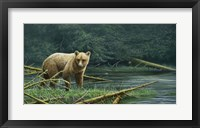 Framed Grizzly And Swallows